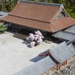 京都葵祭2015年の日程は?ルートや有料観覧席については?