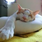 夏の猫の留守番で気を付ける点は?暑さ対策はどうする?