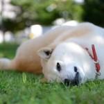 室外犬の暑さ対策はどうする?便利なグッズはある?