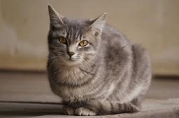 猫が熱中症になった時の症状は?対策は?
