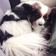 犬の車酔いの症状と原因は?防止するための対策は?
