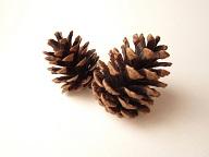 クリスマス飾りを手作り!簡単松ぼっくりツリーの作り方