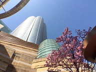 六本木ヒルズでお花見!桜まつりやライトアップも!