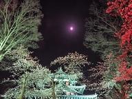 高田城百万人観桜会2017の開花予想は?アクセスや駐車場は?